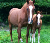 Rainbow & her colt foal by Emerald